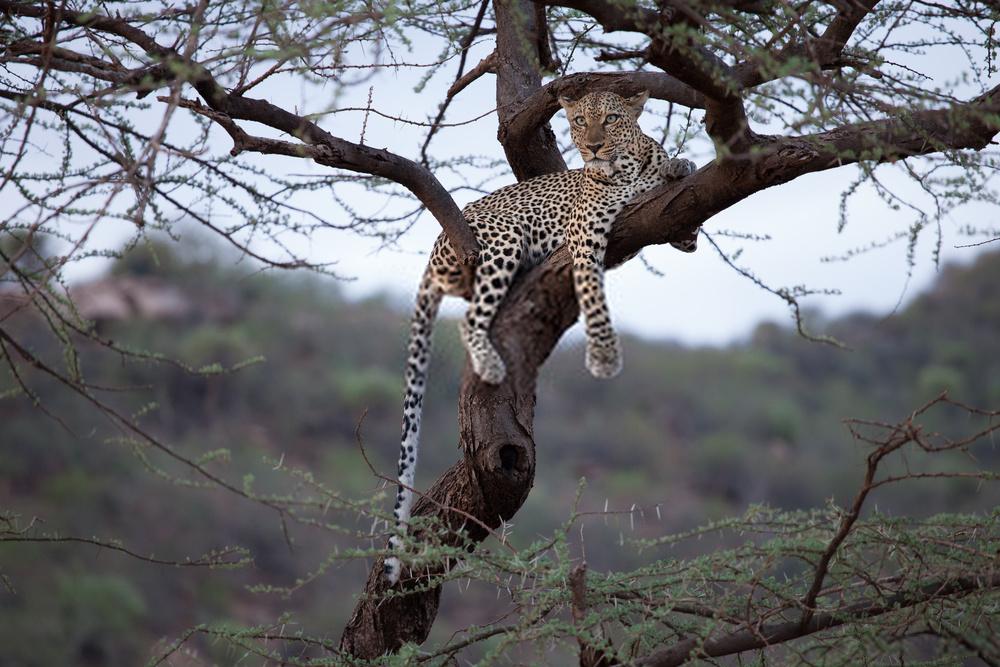 Day 1: Nairobi – Masai Mara Game Reserve