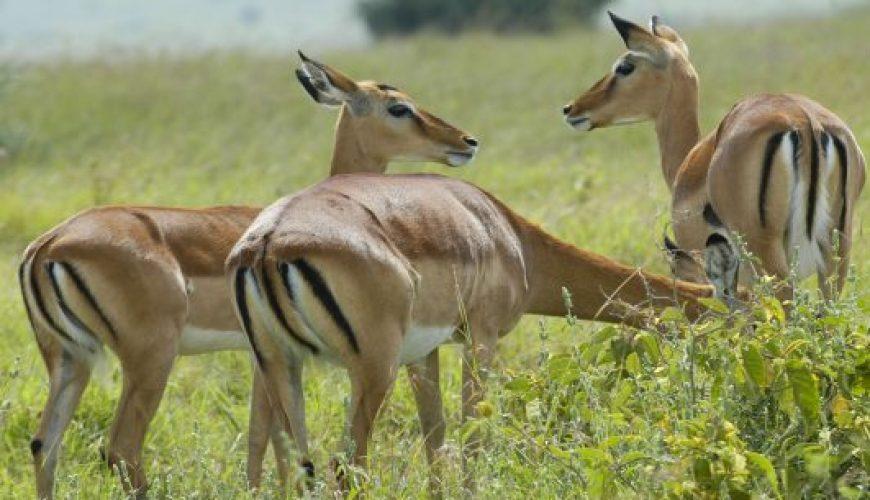 11 days best of kenya and tanzania camping safari
