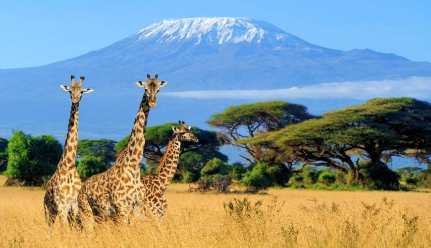 Discovery of Africa beyond travel needs