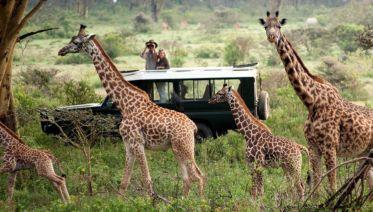 Day 1. Nairobi - Nakuru National Park