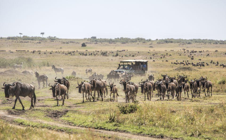 Day 5: Masai Mara National Reserve – Nairobi
